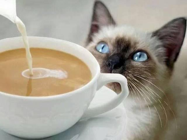 Кофе и коты – антистресс по-итальянски
